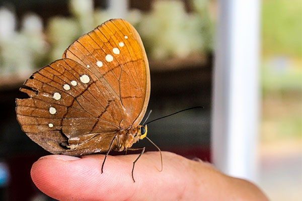 Pinpilinpauxa. Mariposa en euskera. Foto: Iñaki González.