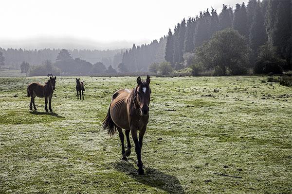 irrintzi es relincho de caballo en euskera